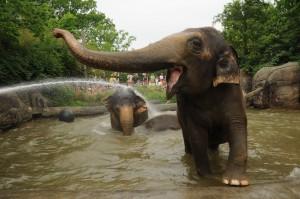 09 A Elephant 0113