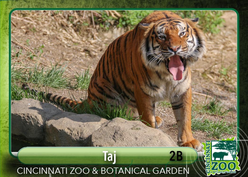 Zoo's Animal All-Stars Lineup - Cincinnati Zoo & Botanical ...