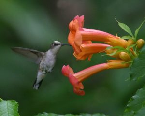 Hummingbird (Photo: Brian Jorg)