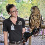keeper holding Eurasian eagle owl