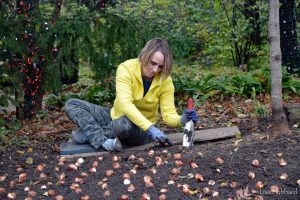 Horticulture garden planting