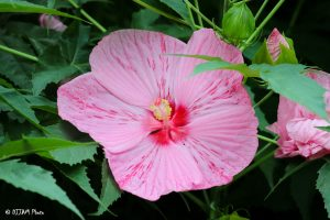 Look and learn annuals plants