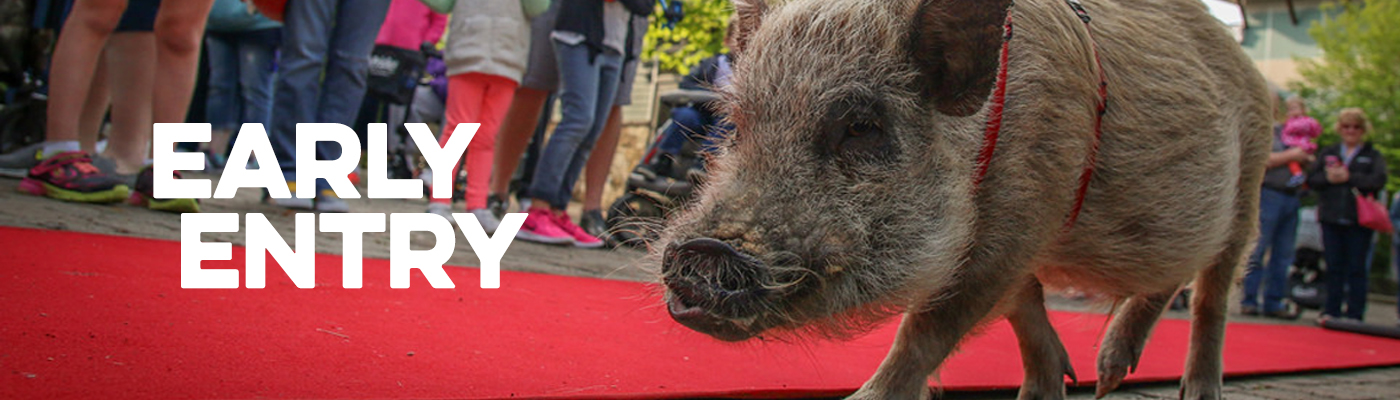 Early Entry Pig and red carpet banner