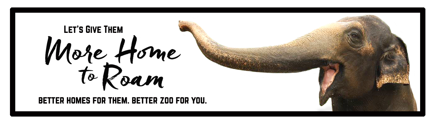 More Home to Roam banner