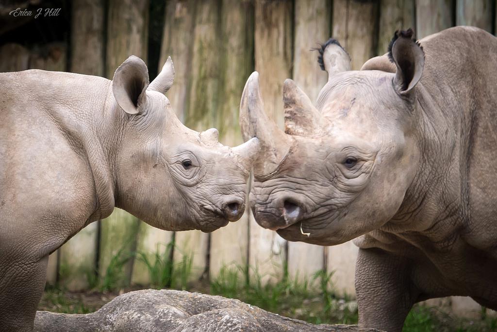 Bowling For Rhinos - Off Site Fundraiser - Cincinnati Zoo