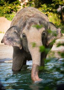 mai thai elephant