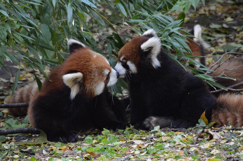 Membership: Join the Zoo Family - Cincinnati Zoo & Botanical
