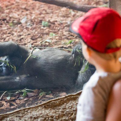 Indoor Gorilla World