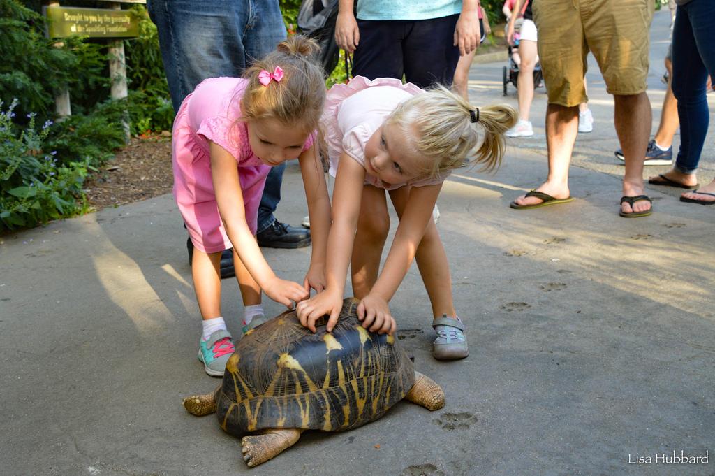 kids tortoise