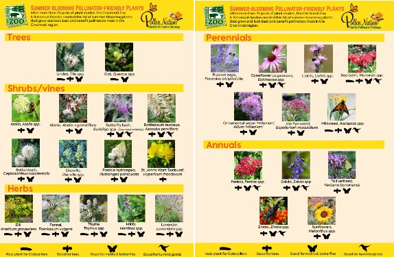 Summer-Blooming Plants pdf