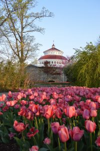 reptile house with tulips