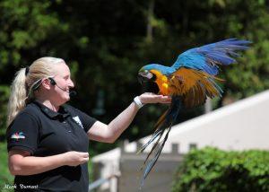 Zoo employee holding a Macaw bird