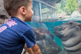 kid staring at fiona the hippo - purchase a membership page