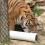 University of Cincinnati Students Create Innovative Enrichment for Animals at the Cincinnati Zoo