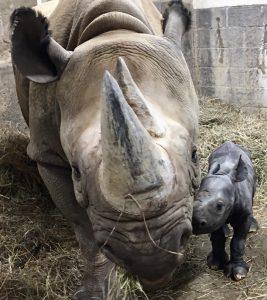 Mom and Baby rhino