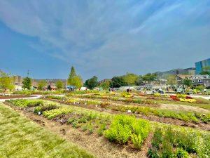 Rockdale Urban Learning Garden