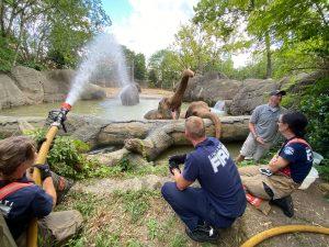 Cincinnati Fire Department hosing off animals