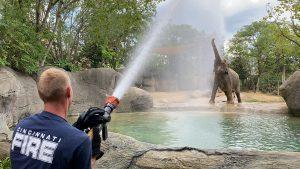Cincinnati Fire Department hosing off elephants