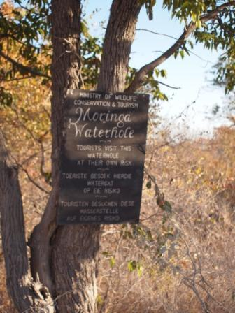 The Moringa Watering Hole Cincinnati Zoo Blog