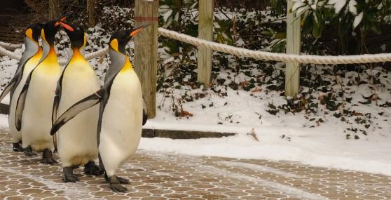 10 Penguin 0008 B