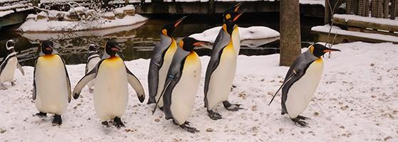 penguindays