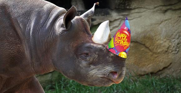 rhino_birthday