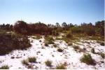 Avon Park harebells habitat in Florida