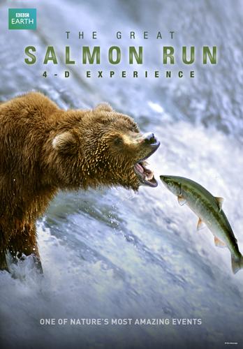 great salmon run