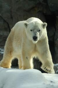 PolarBear 2