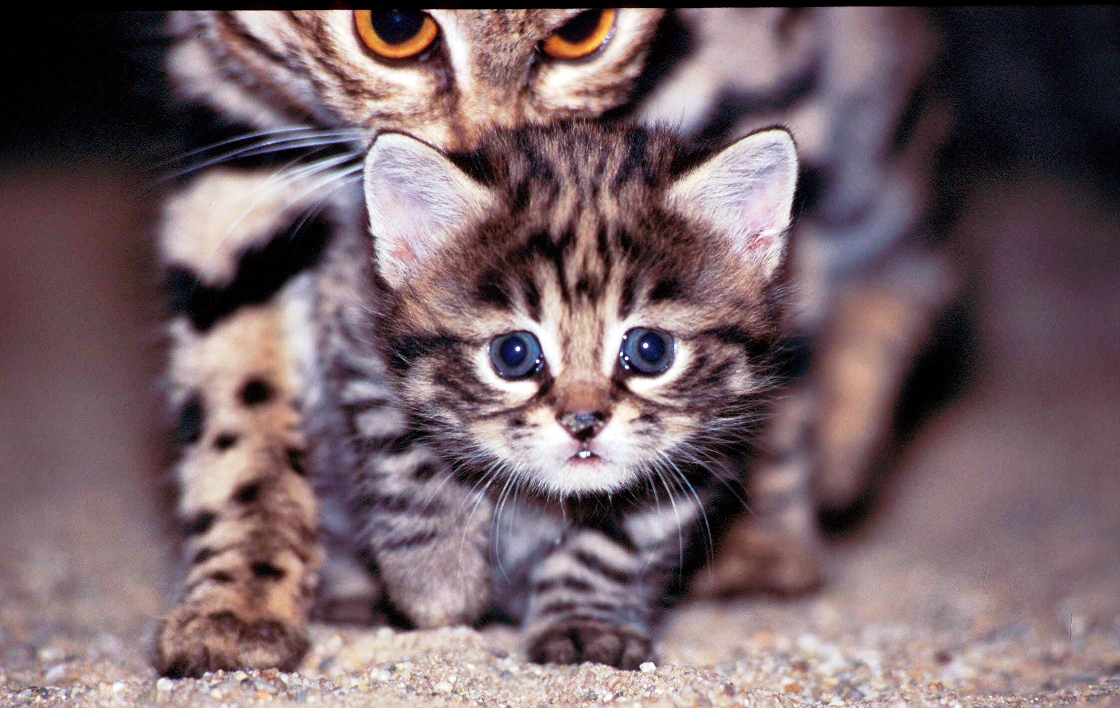 THE SMALLEST CATS In The World - YouTube