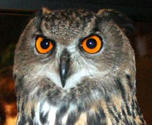 eagle_owl_lower