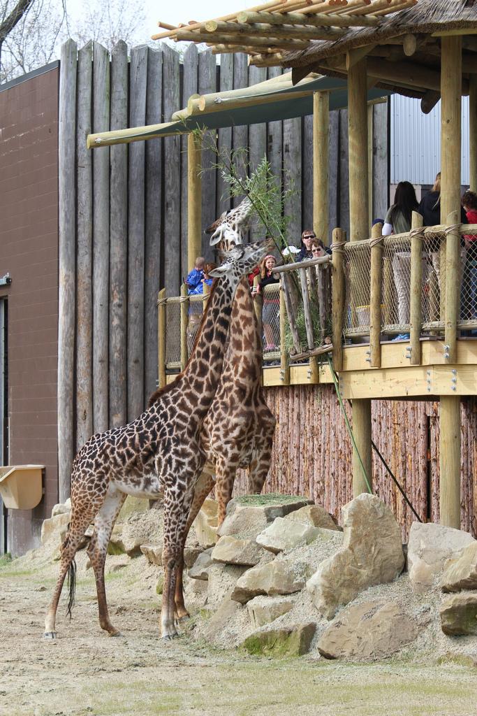Africa The Cincinnati Zoo Amp Botanical Garden