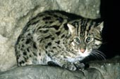 fishingcat_000