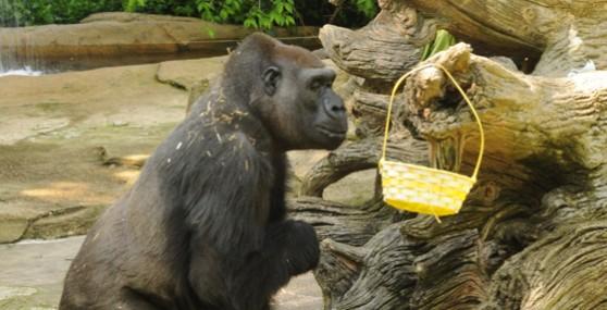 gorilla_basket