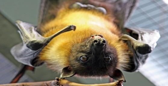 Nocturnal Image - Bat
