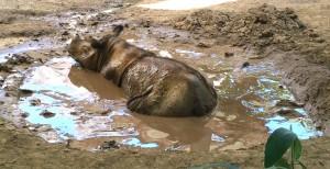muddy1