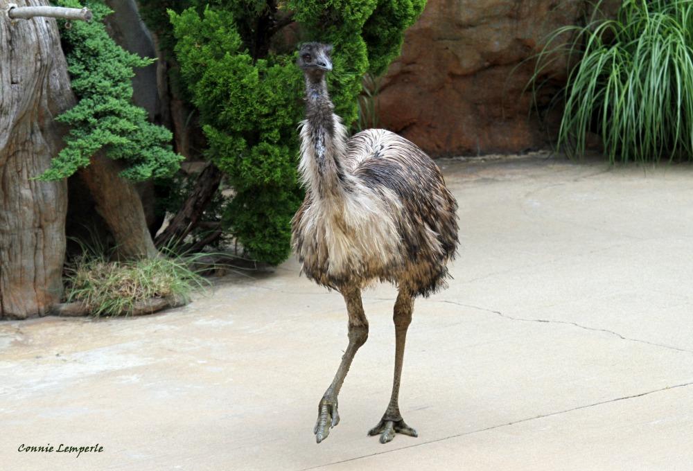 emu web