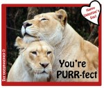 Your Purrfect