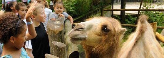 Feed a camel!