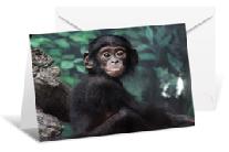 bonobocard