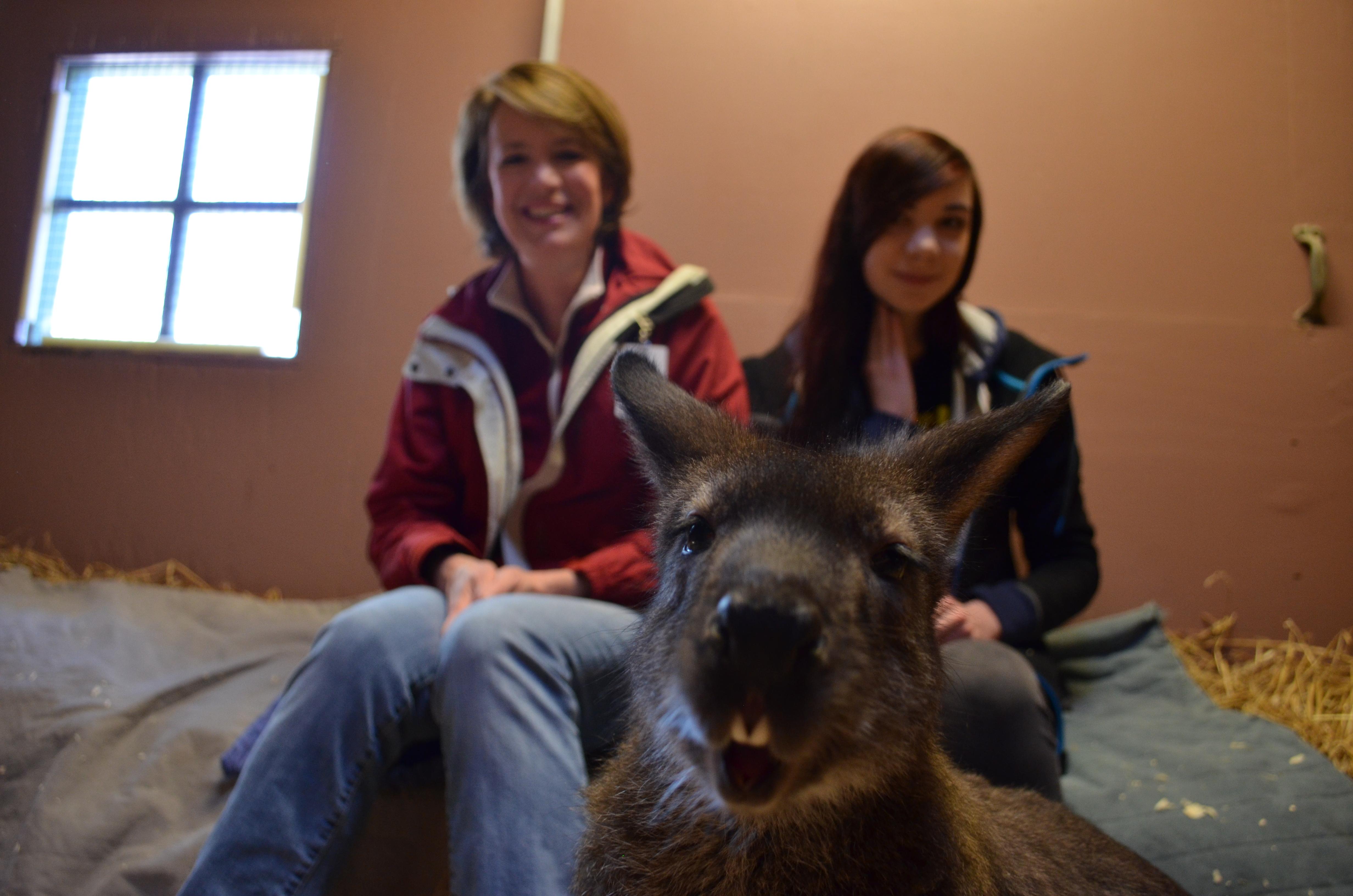 Behind The Scenes Experiences The Cincinnati Zoo