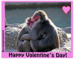 snow_monkey_love
