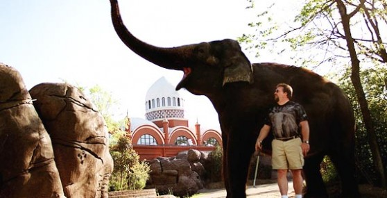elephant_PO