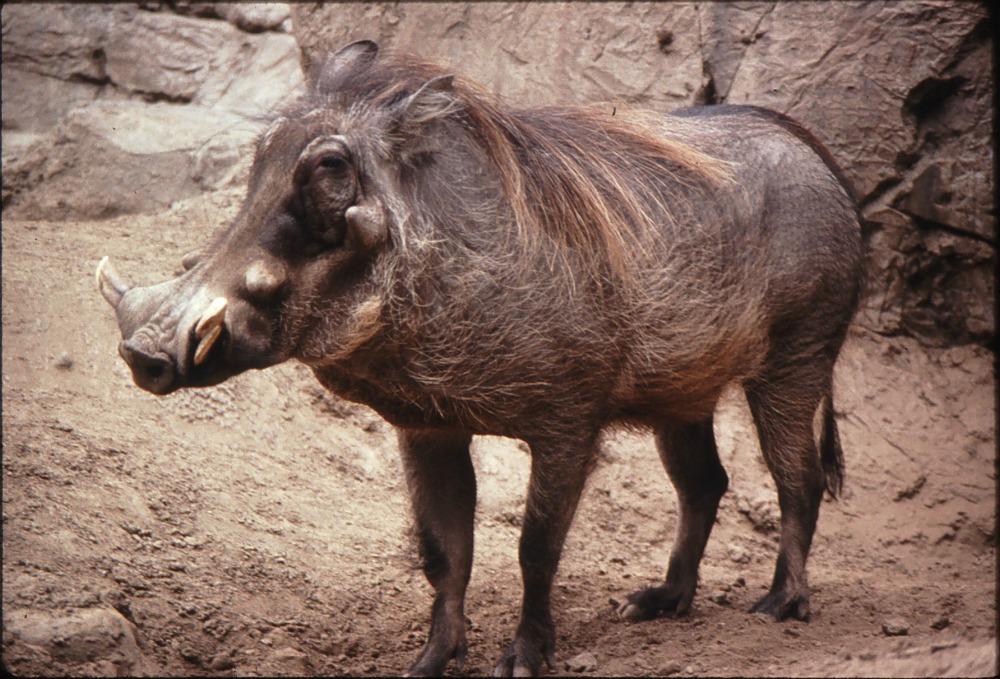 Warthog (16) mike d