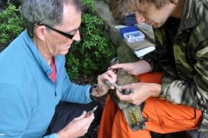Kea research (Photo: Nigel Adams)
