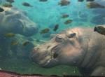 dark_hippo