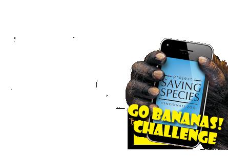 Go Bananas! Challenge