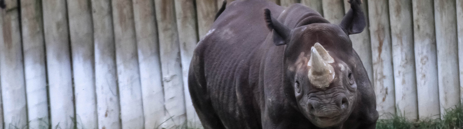 rhino_reserve