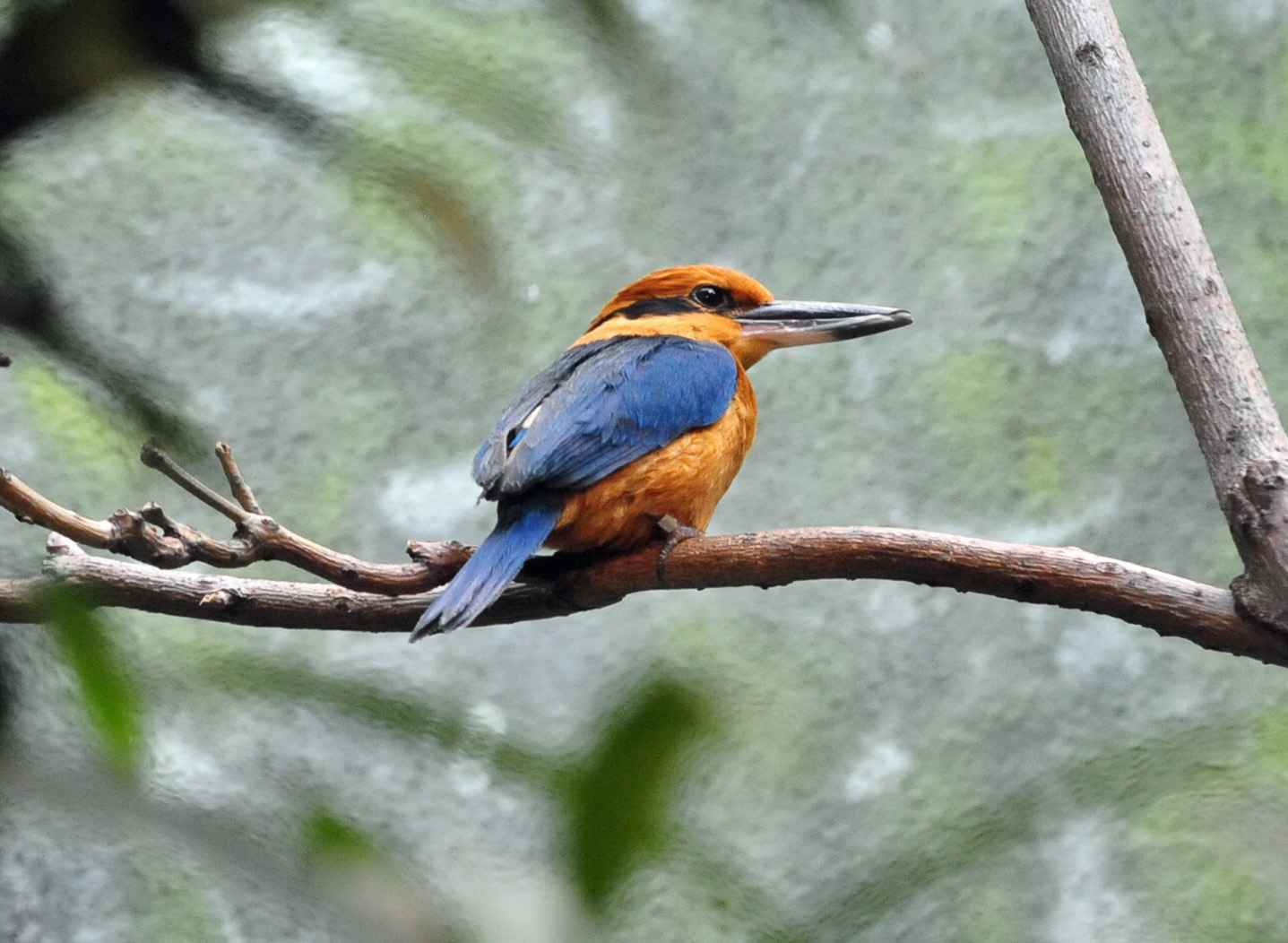 GM Kingfisher_HeatherPaul