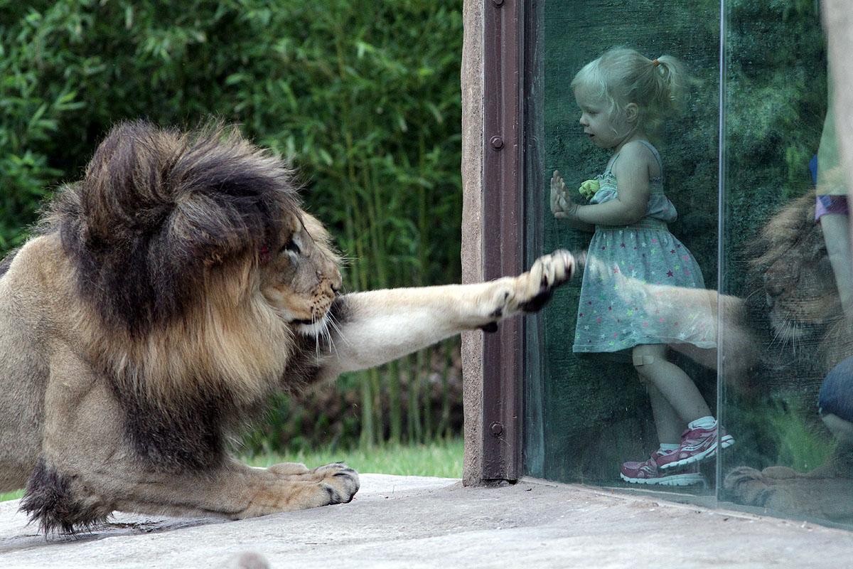 Zoo Camps - The Cincin...